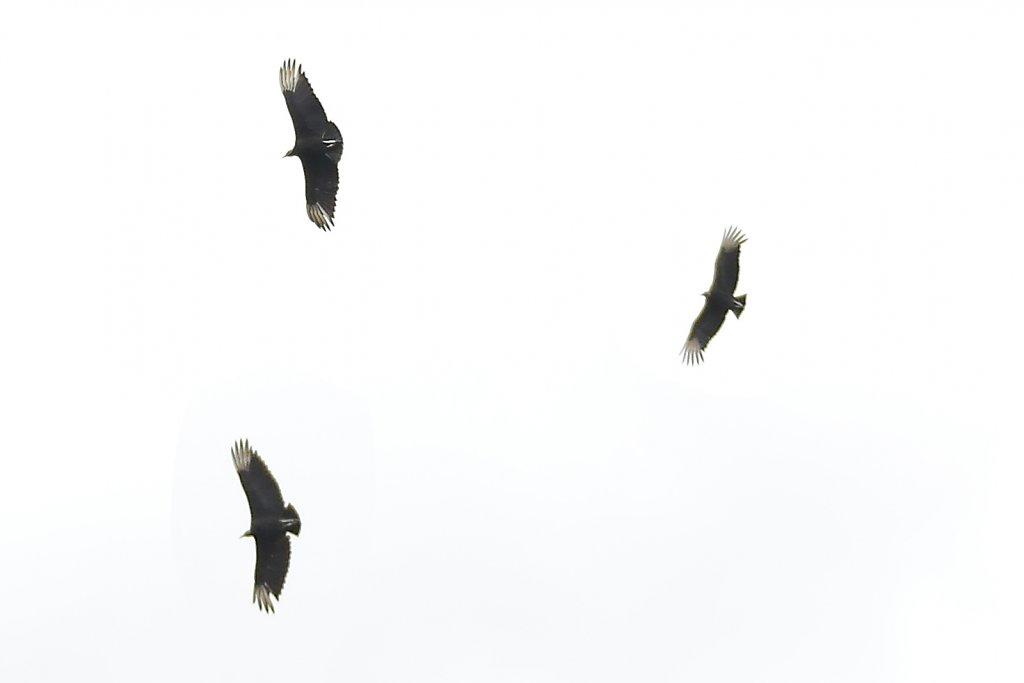 saopaulo-26.jpg