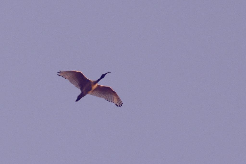 s-2.jpg